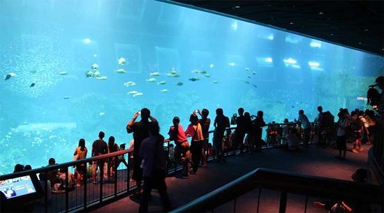 Bán vé sea aquarium singapore - Vé singapore aquarium