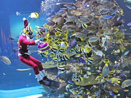 Mua vé thủy cung Sea Aquarium Singapore ở đâu giá rẻ nhất